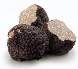 truffe-noire-tuber-melanosporum